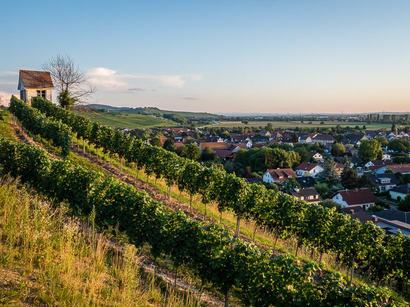 Blick über Müllheim-Hügelheim und die Rheinebene